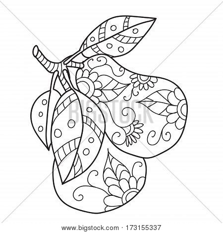 Coloring pages for adults.Decorative hand drawn doodle engraving pear vector sketchy pattern.