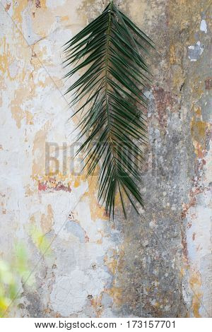 Palm branch on an old ancient house wall background as palm sunday religion christian tradition concept