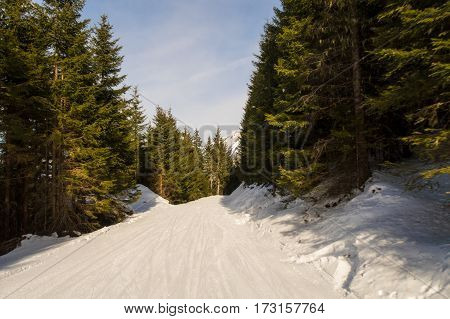 Tree runs at a ski resort in the winter. Fresh snow and piste can be seen.