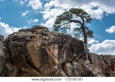 Lone tree on a rock outcropping against the sky