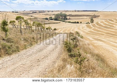 summer landscape with a country road on a summer day between Hornillos del Camino and Hontanas, Burgos, Spain