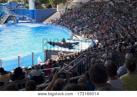 ORLANDO - JULY 24: Killer whale greets crowed of visitors people during show at Sea World, Orlando.