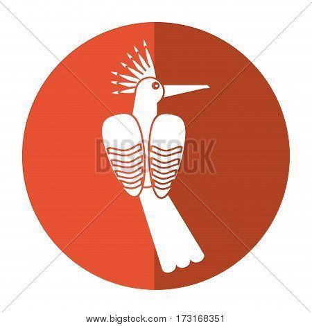 hoopoe bird exotic shadow vector illustration eps 10