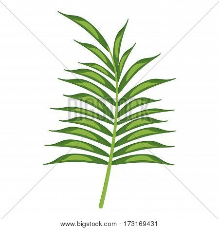 leave palm tropical flora vector illustration eps 10