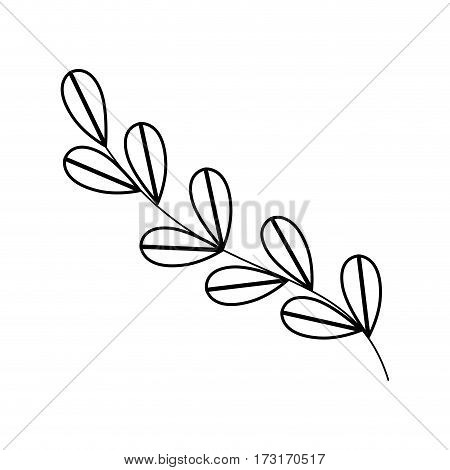 monochrome contour with oval leaves with ramifications vector illustration