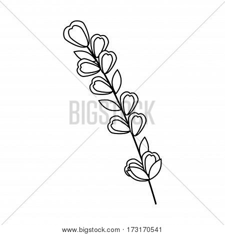 monochrome contour flowers with oval leaves and ramifications vector illustration