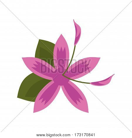 flower daylily beautiful flora vector illustration eps 10