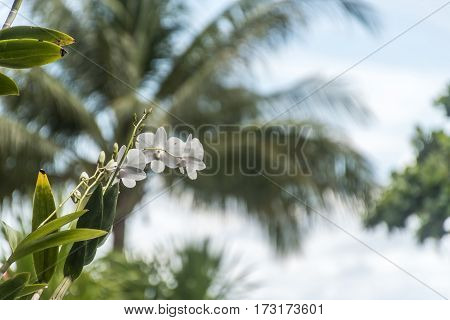 Small orchid in the tropical jungle of Thailand Koh phangan with Ocean background