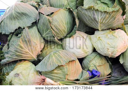 grocer and Cabbage pictures in the grocery store
