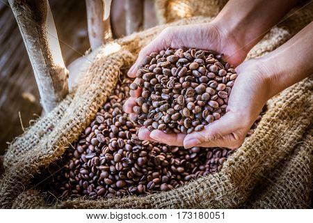 Closeup of coffee beans in hand with sunlight in gunny bag