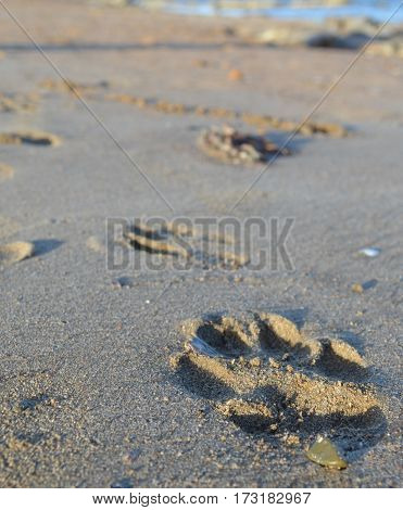 dog paw in sand on the beach