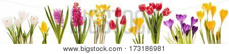 Spring flowers collection isolated on white background