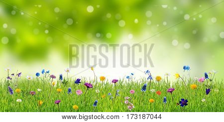 Spring Background With Wild Flowers