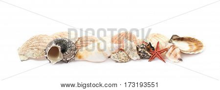 Line of decorational sea shells isolated over the white background