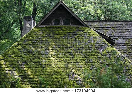 Roof With Vegetation
