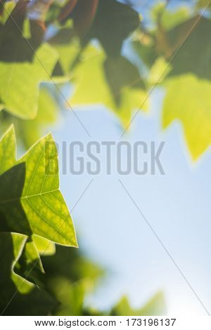 Close-up of green leaves against blue sky