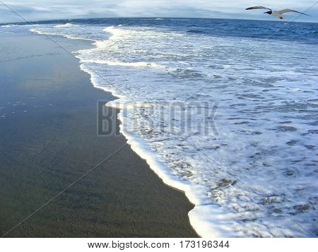 photography with scene of the seascape with flying sea gull