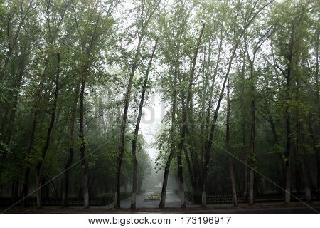 foggy trees in a park in a rainy day