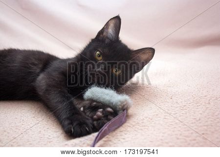 little black kitten plays with grey fluffy toy mouse