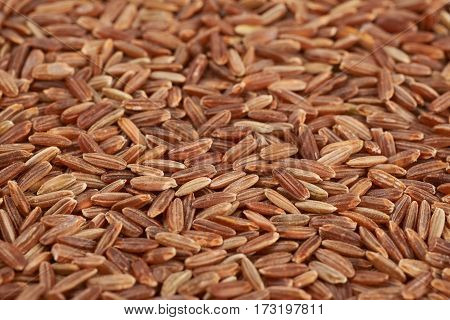Surface coated with the brown rice grains as a food and cooking backdrop composition with a shallow depth of field