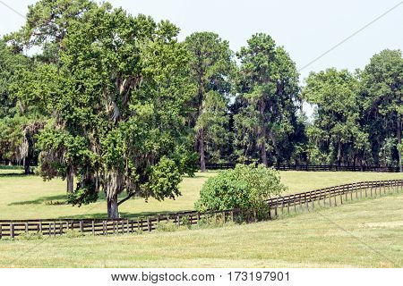 Summer southern pasture with large live oaks and dripping spanish moss