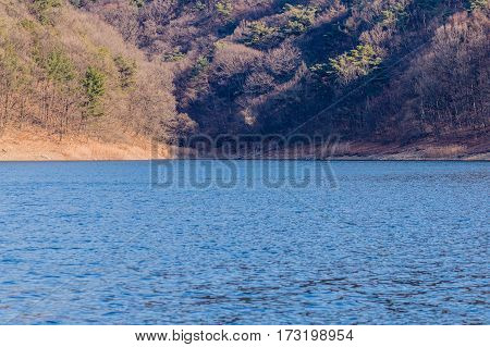 Winter landscape of a small cove in a lake in South Korea with evergreen trees among barren trees