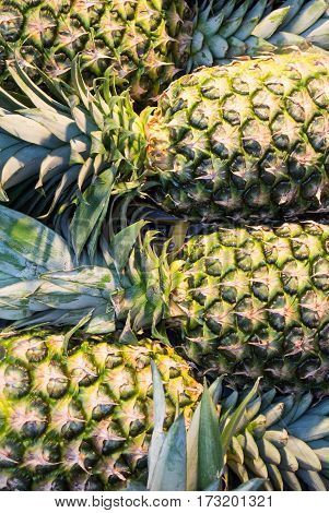 A close-up view of fresh pineapples at the market of Madrid Spain.