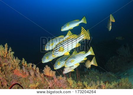 Coral reef fish underwater in ocean
