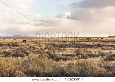Desert Landscape In Arizona