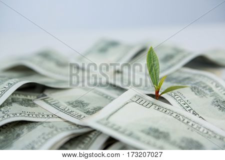 Close-up of small plant growing on currency note