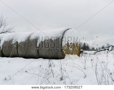 A row of round hay bales to left of frame in the snow