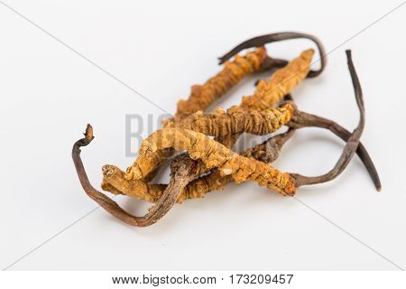 Yarsagumba Cordyceps sinesis Yartsa Gunbu used in Traditional Chinese Medicine Himalayan gold Nepal isolated in white background