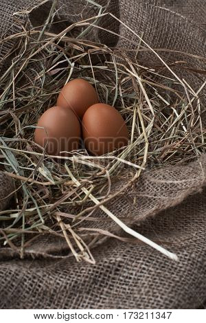 Ecological natural fresh bird eggs in a nest born on fabric