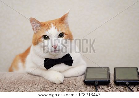White-a red cat with a black bow tie lying next to the phones