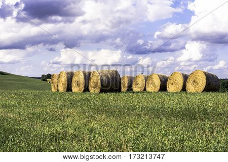 Round hay bales stored in a row in a field in rural Ohio