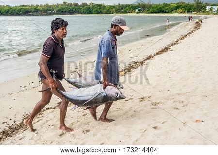Tamarin Mauritius - December 10 2015: Fishermen carry two big tuna fish on the beach of Tamarin Bay in Mauritius.