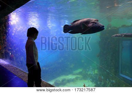 Boy Looking At Big Fish