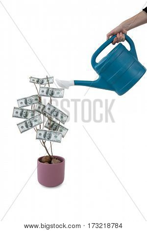 Womans hand pouring water on money plant with watering can against white background