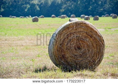 Round bale of hay to the right in the foreground with other bales in the background.
