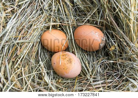 Dirty Eggs On Hay. Top View.