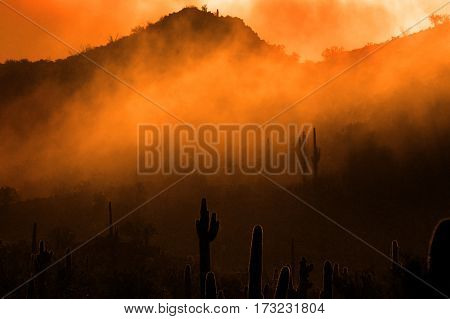 Misty morning in desert with cactus cacti in Arizona wilderness
