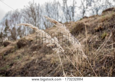 dry stalks of grass in the wind in a ravine