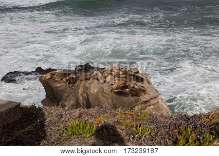 Sea lions on stone in San Diego