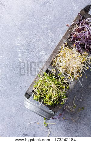 Assorted vegetable sprouts, broccoli, alfalfa, red cabbage in old box on gray stone background with copy space. Top view.