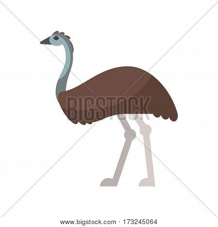 Vector flat style illustration of emu. Icon for web. Isolated on white background.