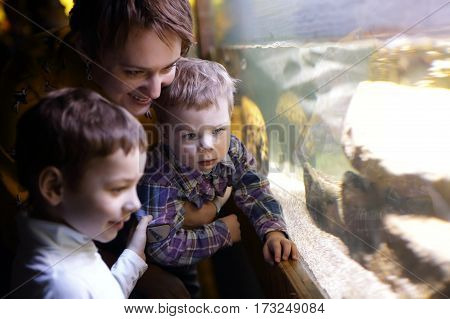 Mother with her sons looking at fishes in an aquarium