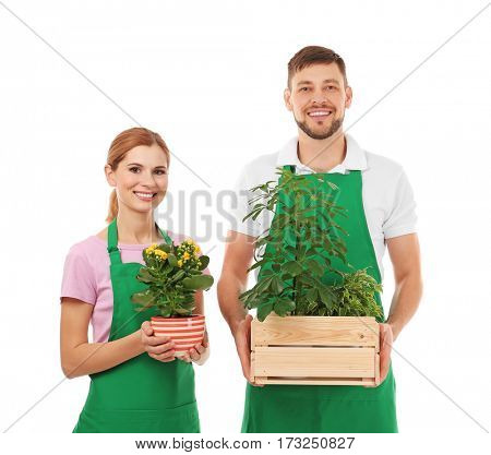 Two florists holding house plants isolated on white background