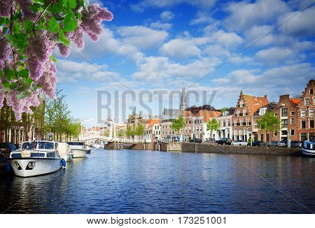 Spaarne river and old town in Haarlem, Netherlands with lilac flowers