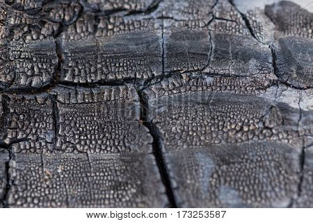 Burned Wood Narrow Focus Close Up with cracks throughout