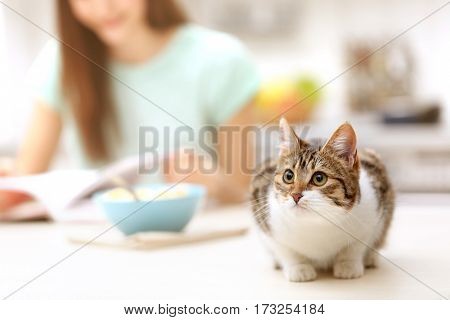 Cute funny cat in kitchen and blurred woman on background